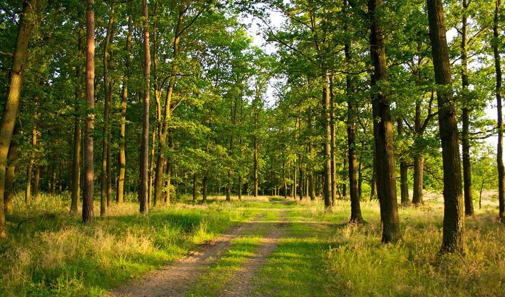 Гомольшанские леса