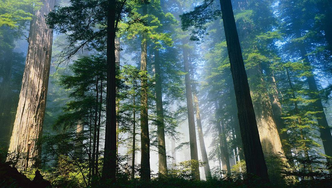 Кологривский лес