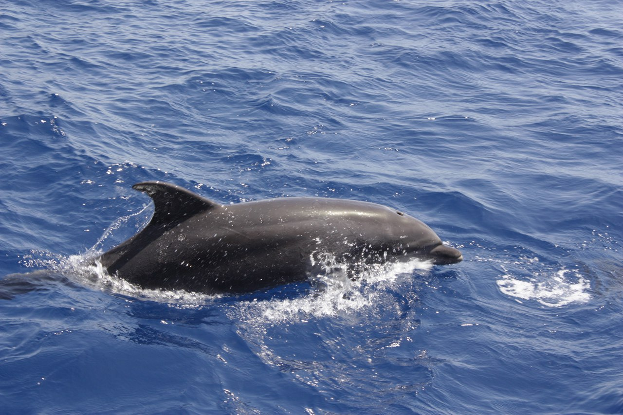 Проект «Дельфинология» - яхт-экспедиции на Черном море. Фотография проекта.