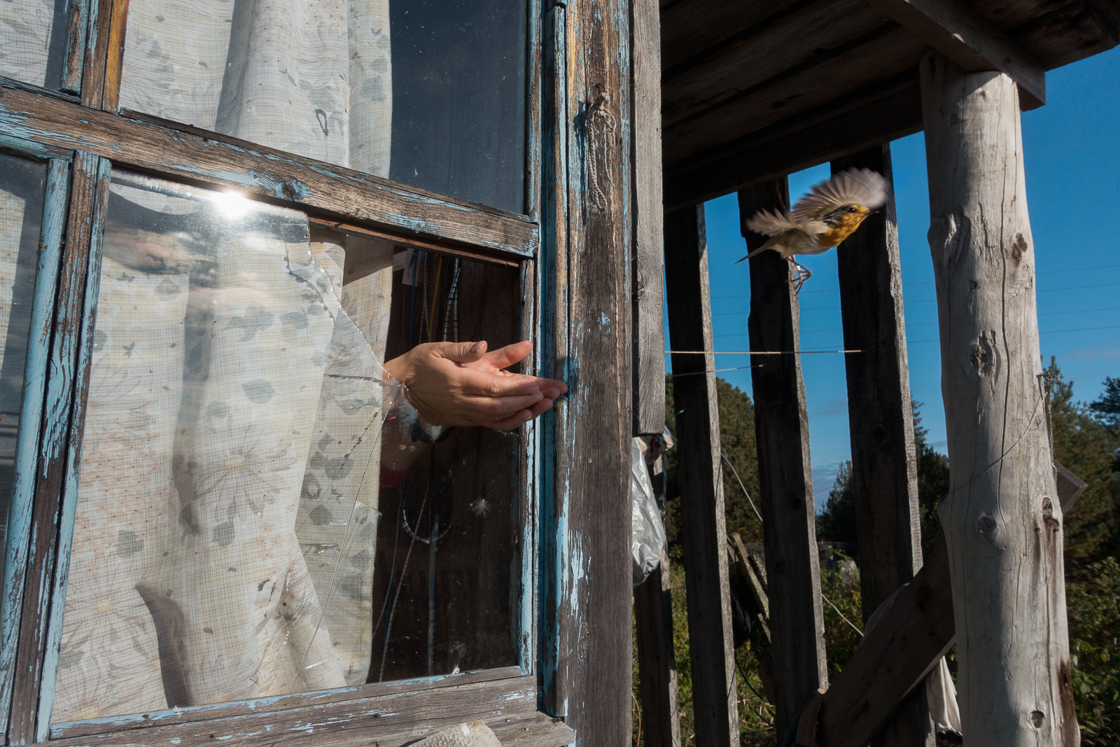 Окольцованная зарянка. Фото Анастасии Павлицкой.