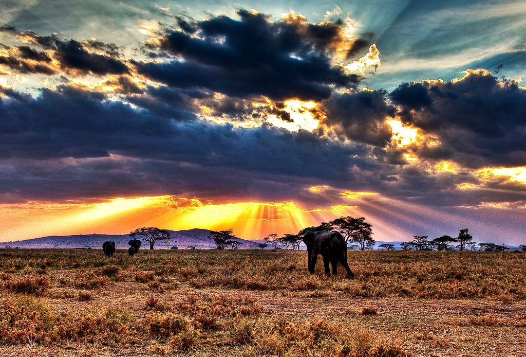 Танзания. Фотография, http://yousense.info/746f70/top-10-best-national-parks-in-tanzania-overview-bookmundi.html/.