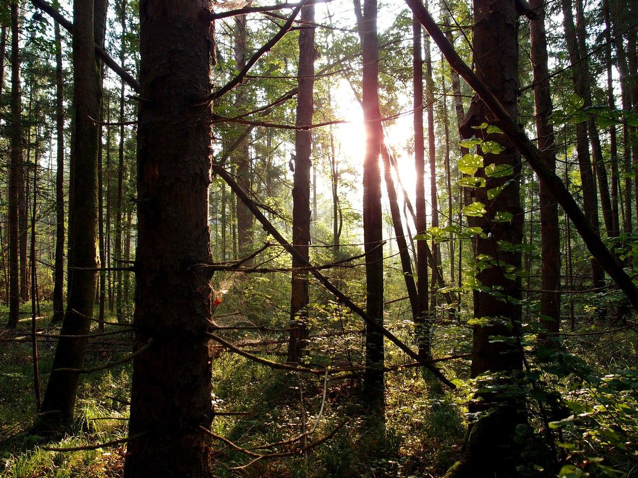 Национальный парк «Угра», Россия. Фотография предоставлена Еленой Чирковой.