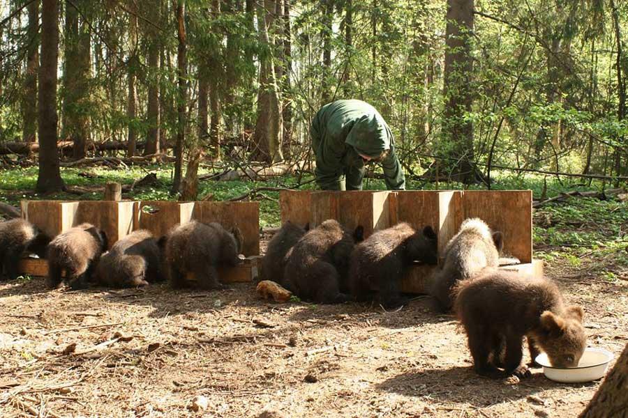 На Биологической станции «Чистый лес», Россия. Фотография Екатерины Пажетновой.