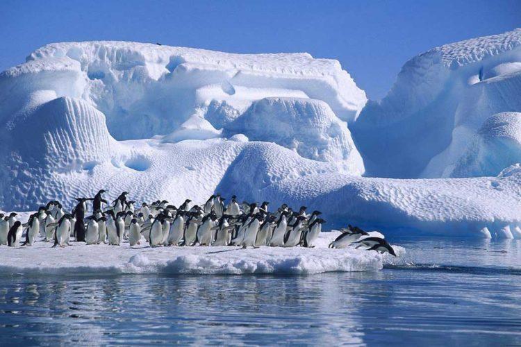 Антарктида. Фотография с выставки «Антарктида: два века исследований», http://www.visit-petersburg.ru/ru/news/4050/.