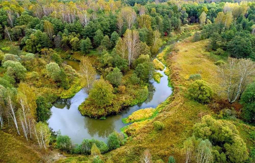 Лес осенью. Заповедник «Калужские засеки», Россия. Фотография Виталия Горшкова.