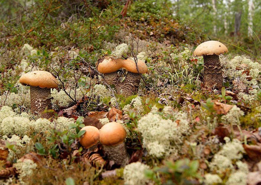 На озере Лама. Фотография Алексея Дисертинского, http://rgo-sib.ru/reportage/433.htm.