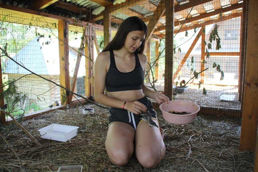 «Кормление бесконечно голодных птенцов». Центр реабилитации и реинтродукции диких птиц «Воронье Гнездо». Фотография Веры Пахомовой.