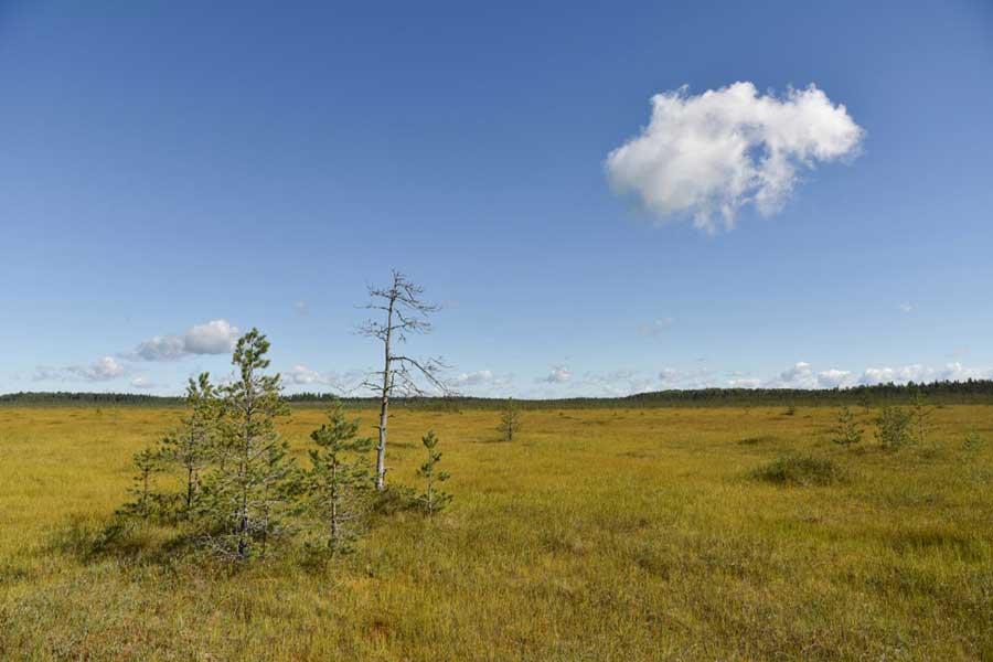 Центрально-Лесной государственный природный биосферный заповедник, Россия. Фотография, https://vk.com/clgz31121931.