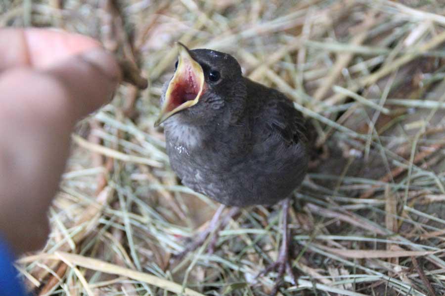 «Вам все равно придется служить им». Центр реабилитации и реинтродукции диких птиц «Воронье Гнездо». Фотография Веры Пахомовой.