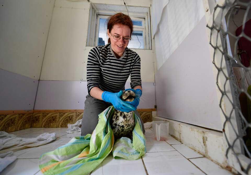 Реабилитационный центр морских млекопитающих «Тюлень», Россия, п. Тавричанка.