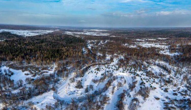 Государственный природный заповедник «Калужские засеки», Россия. Фотография предоставлена Галиной Шубуновой.