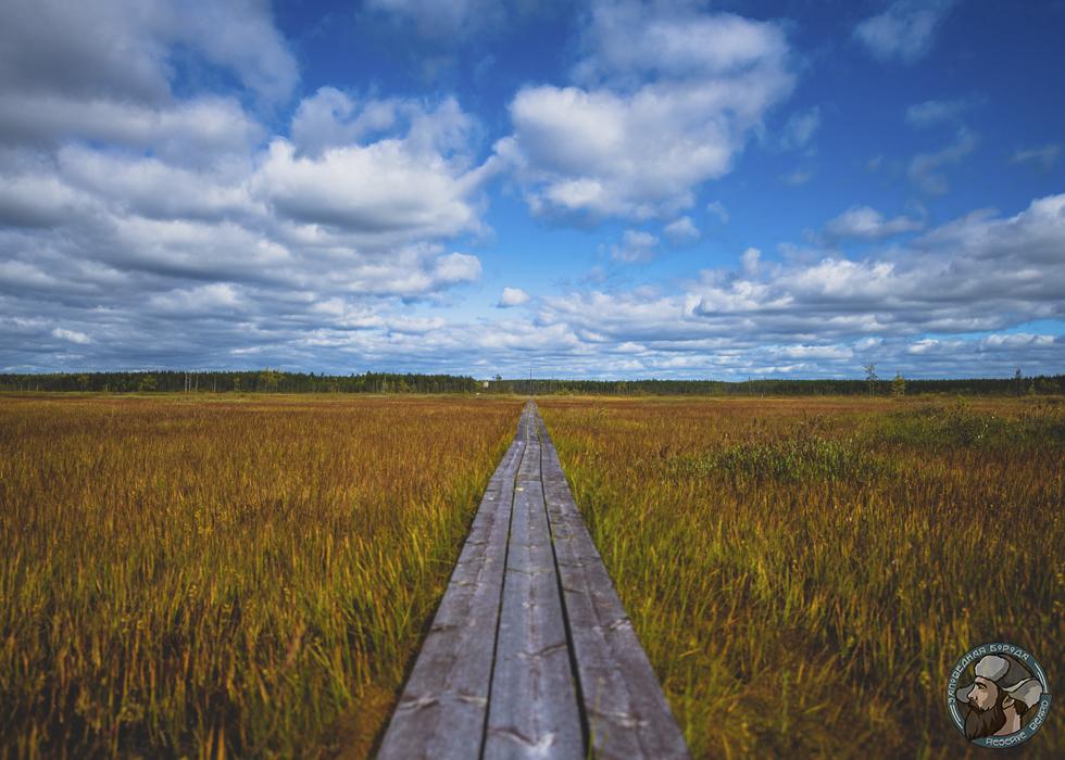 Печоро-Илычский биосферный заповедник, Россия. Фотография предоставлена Юрием Парфёновым.