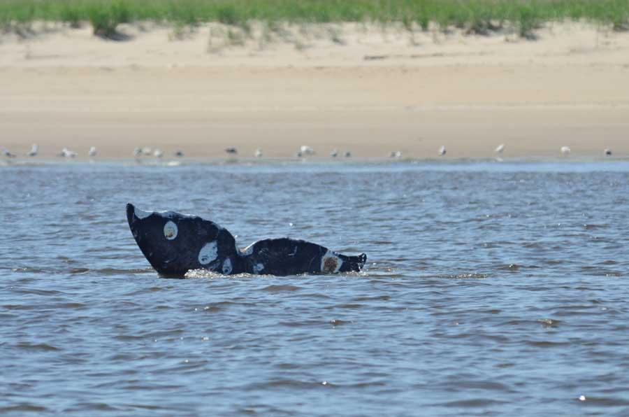 Сахалин, Россия, Russian Gray Whale Project. Фотография Анастасии Куницы.